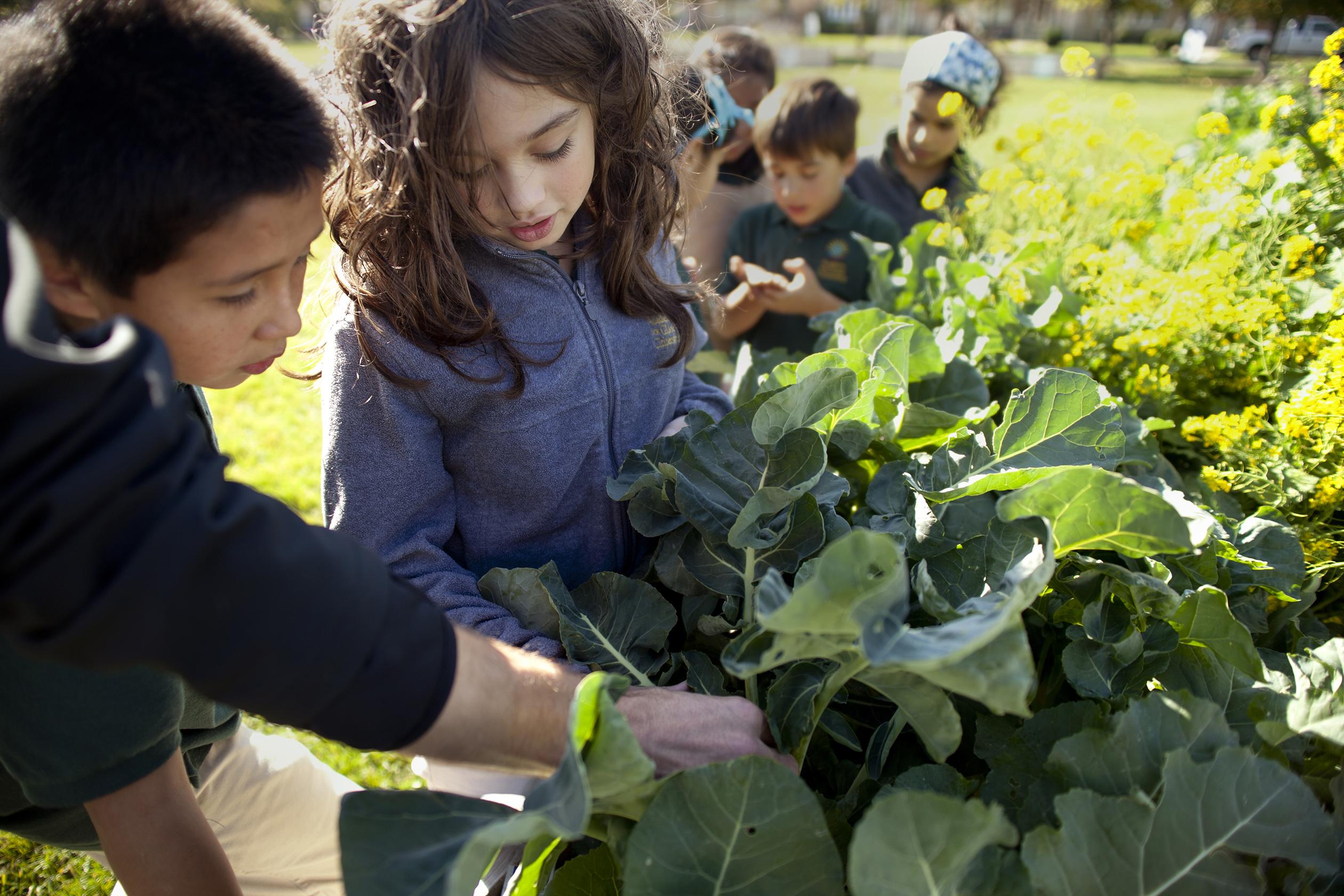 Attività di urban gardening nel giardino dell'AGC_courtesy AGC